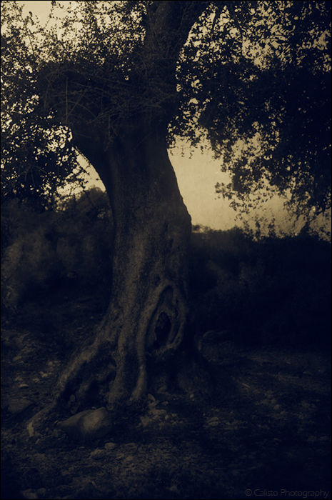 wish tree dream