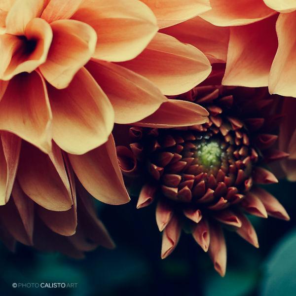 flower, serenade, warm, cold, hide, fragile, blue,