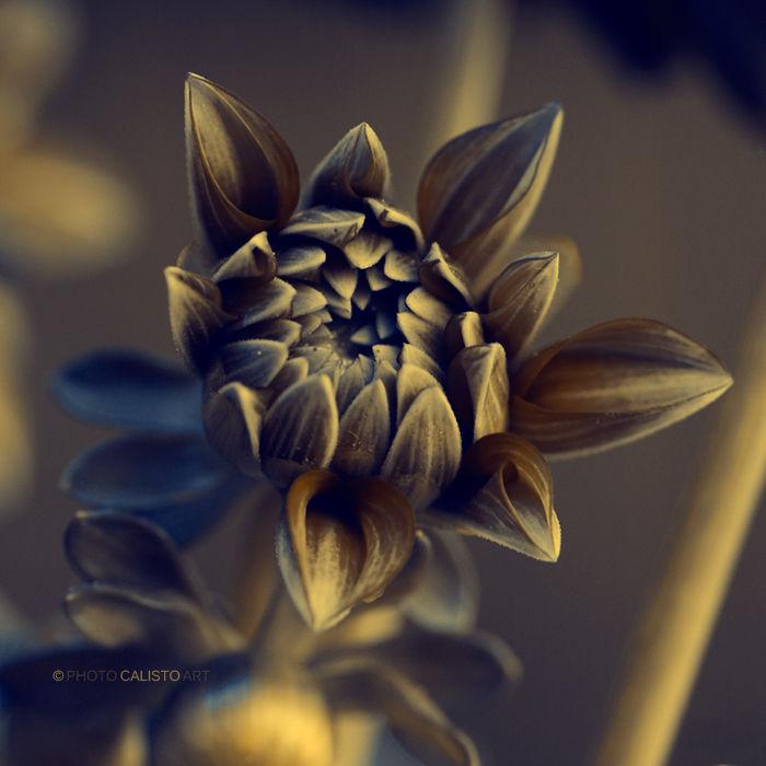 secrets, love, lies, hidden, fake, flower,