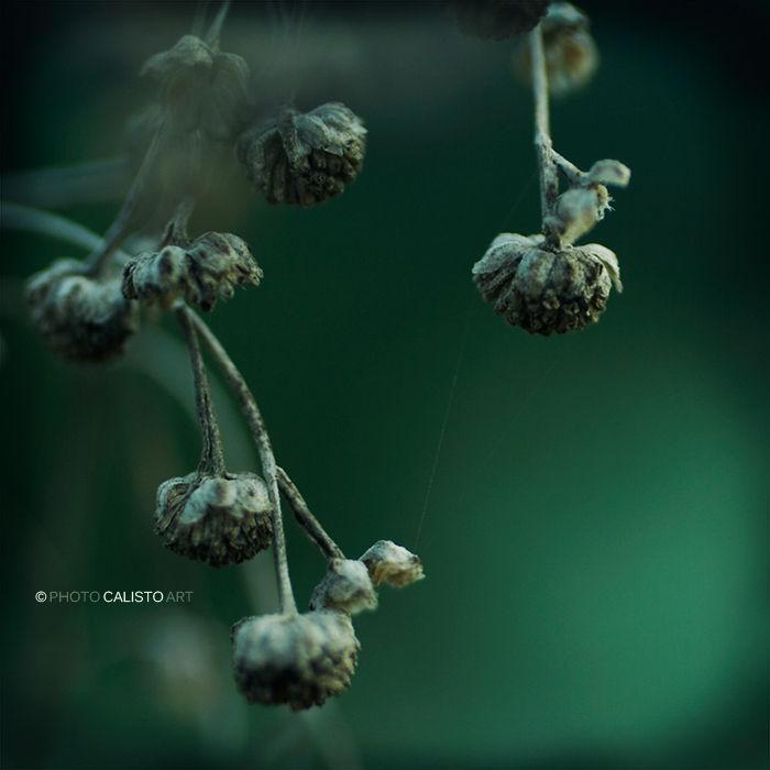 Chaconne, green, drops, square, Yiruma