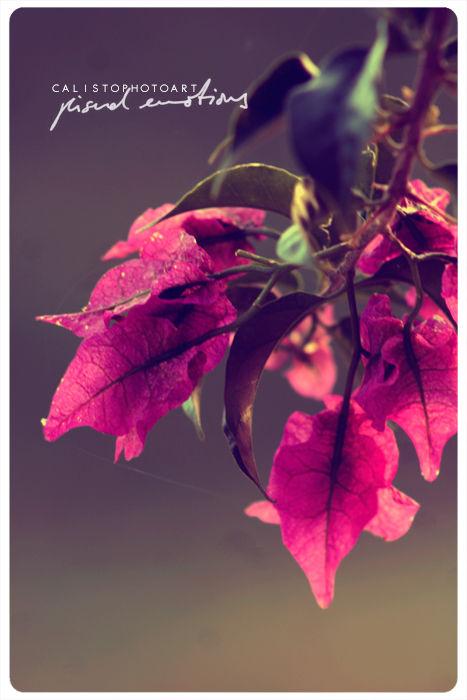 flower, purple, focus, dream, hope