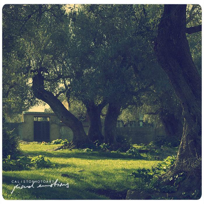 three, tree, wise, green, sun, light, sunlight, sq
