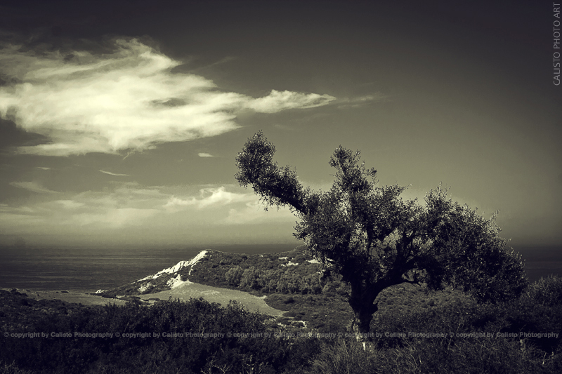 tree, b/w, landscape, view
