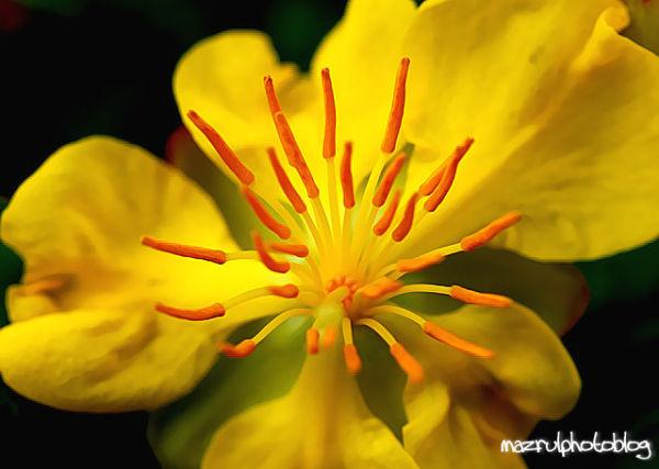 Yellowish!