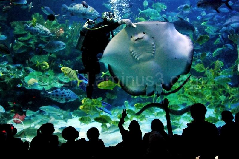 Aquaria KL