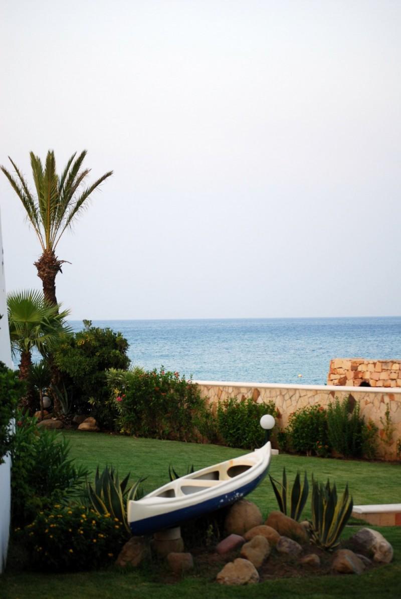 palm tree near the beach
