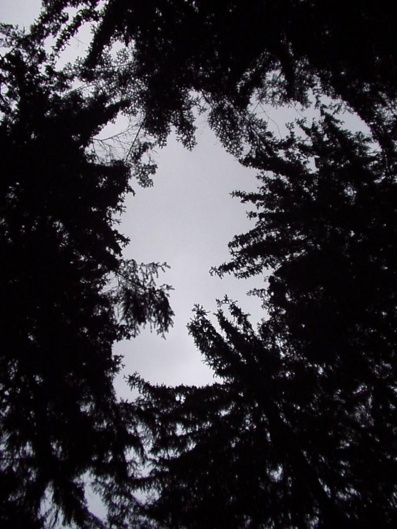 Waldesloch