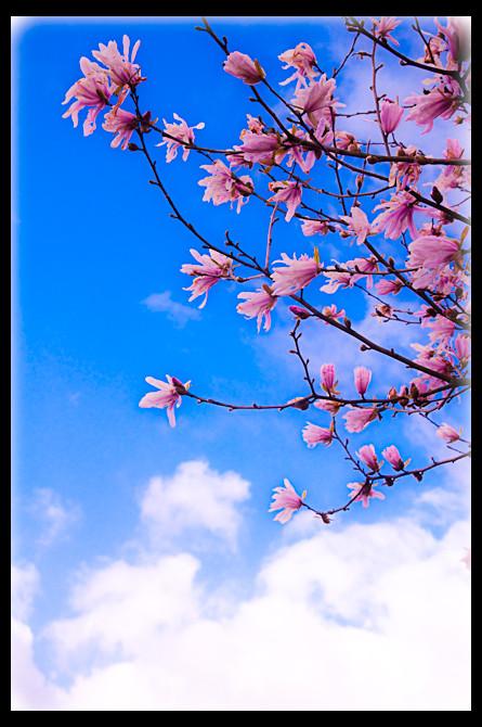 Spring in Komono Japan