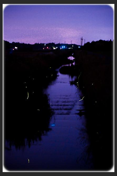 japan, hotaru, fireflies, Komono 蛍 菰野