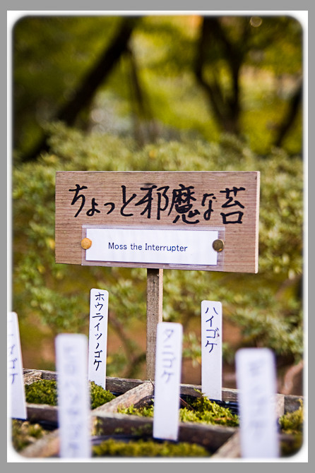 Ginkakuji Moss the interupter