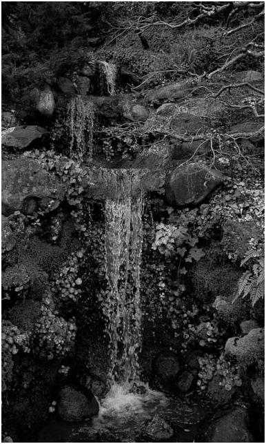 Black and White Hakone Gardens Saratoga