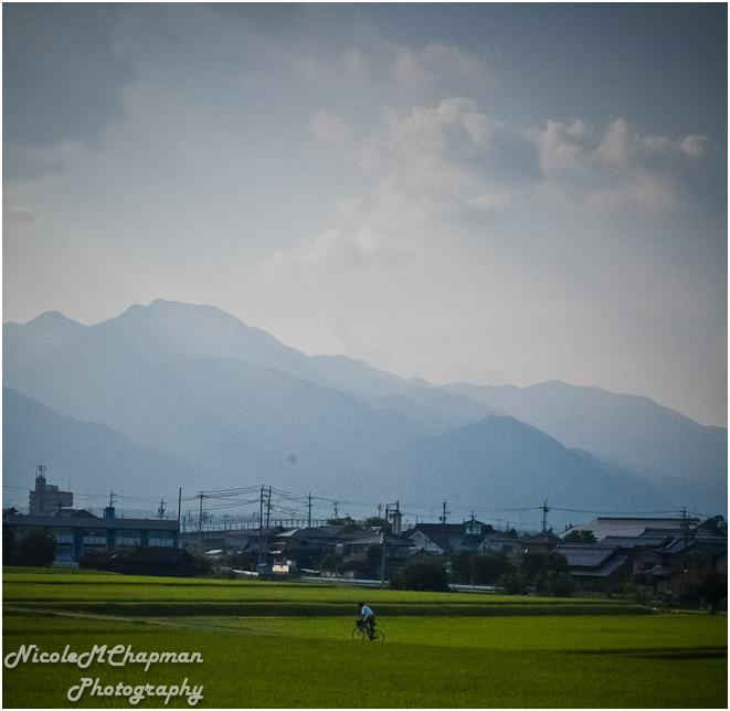 Komono Day