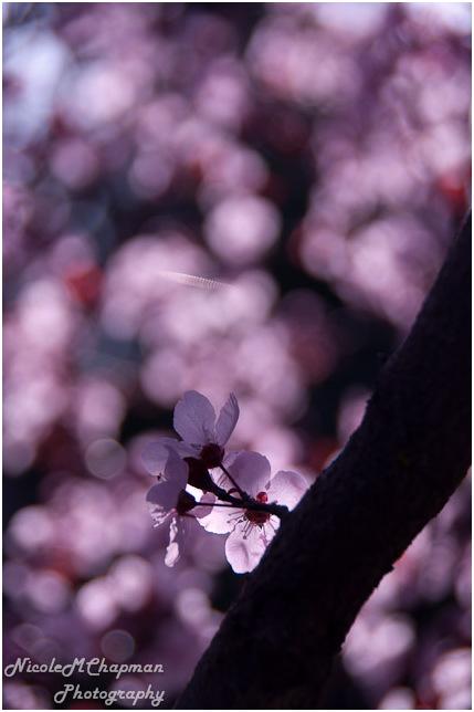 Blossoms 5