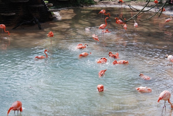 Dallas Zoo: Pretty in Pink