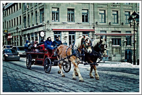 Carriole dans le vieux Montréal