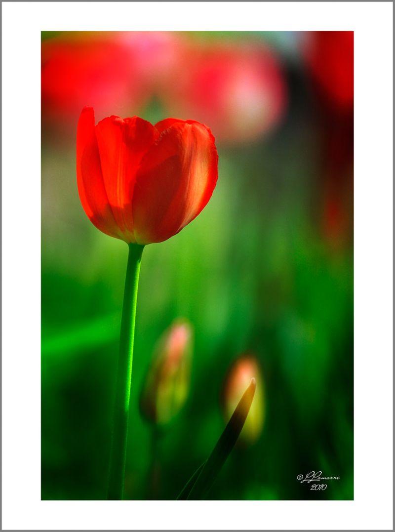 Fleur du printemps