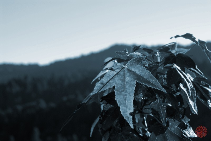 silver toned leaf