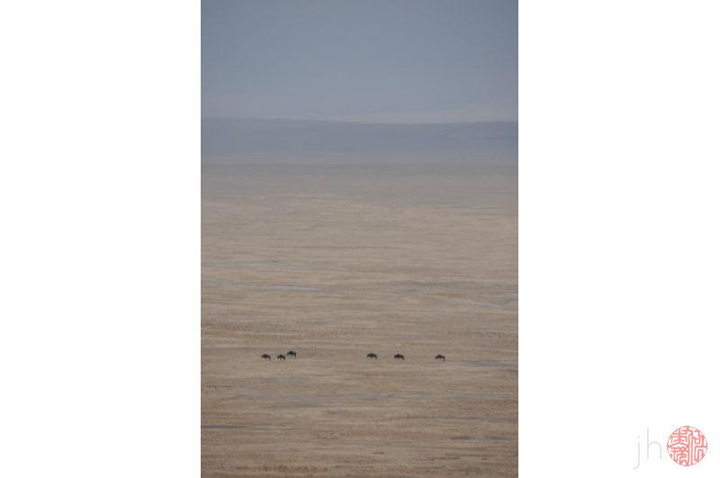 wildebeest in the distance