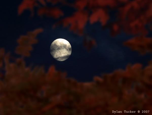 fall moon through the foliage