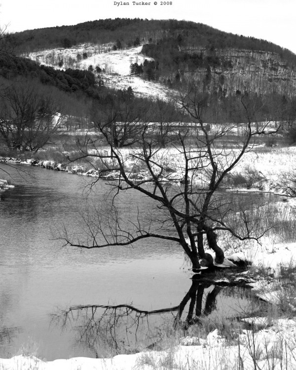 Reflection of a tree in the Delaware River