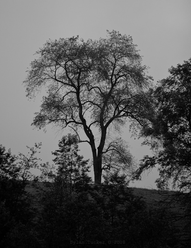 A tree in the fog on a hillside