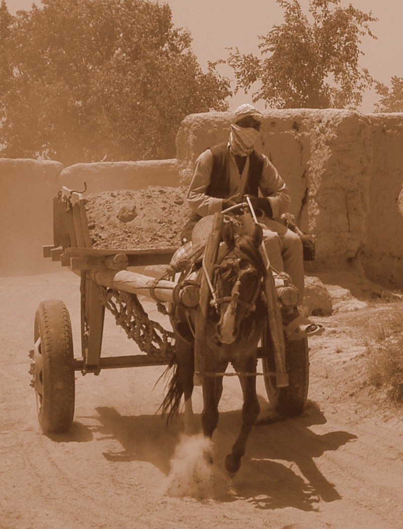 Afghan villager driving  a horse cart