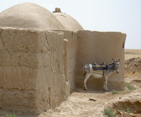 donkey outside of turkmen home