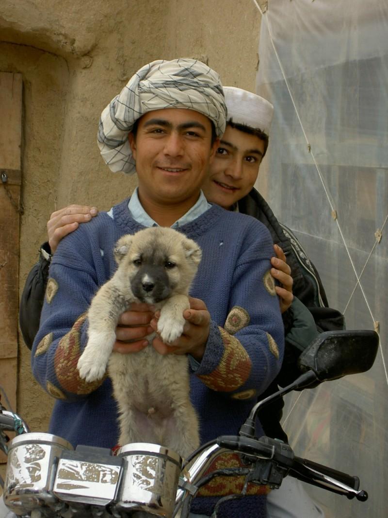 Turkmen sheepdog puppy