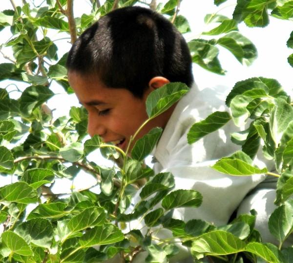 afghan boy amongst mulberries