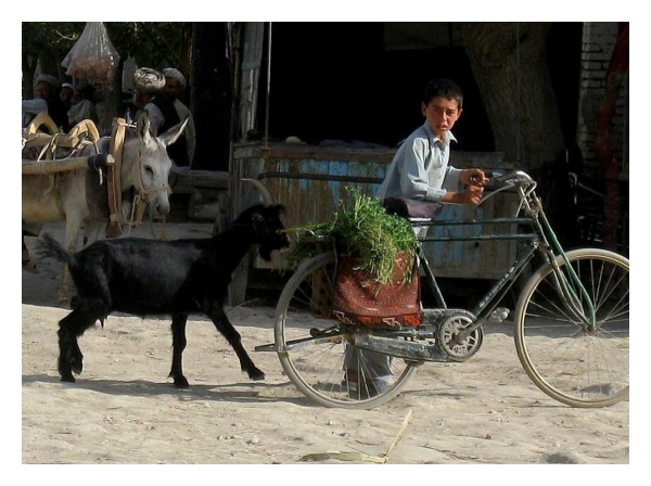 afghan boy and a goat
