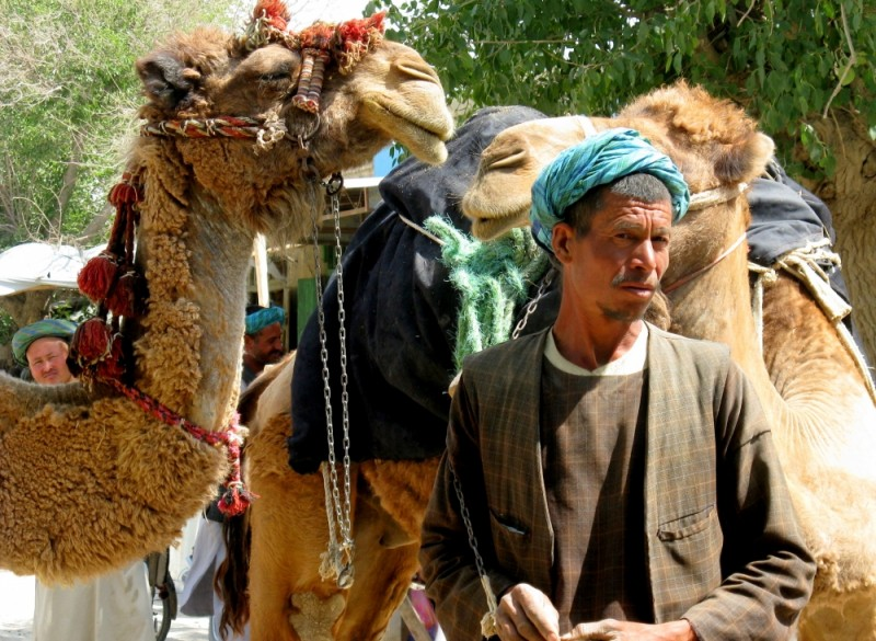 Afghan and camels
