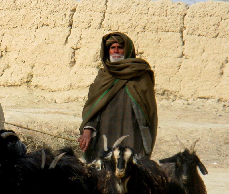 Afghan shephard