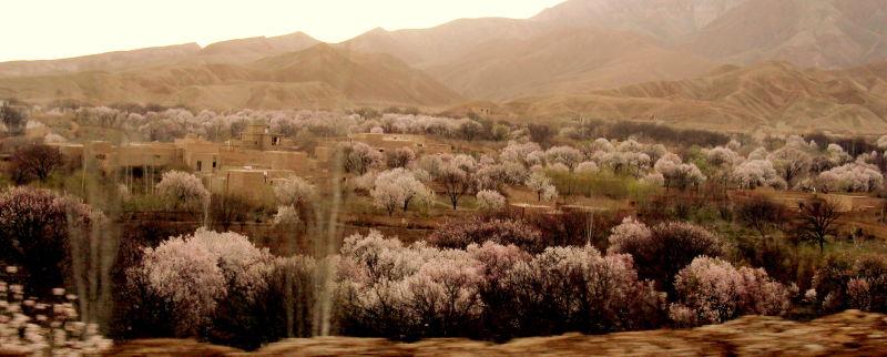 spring  afghanistan