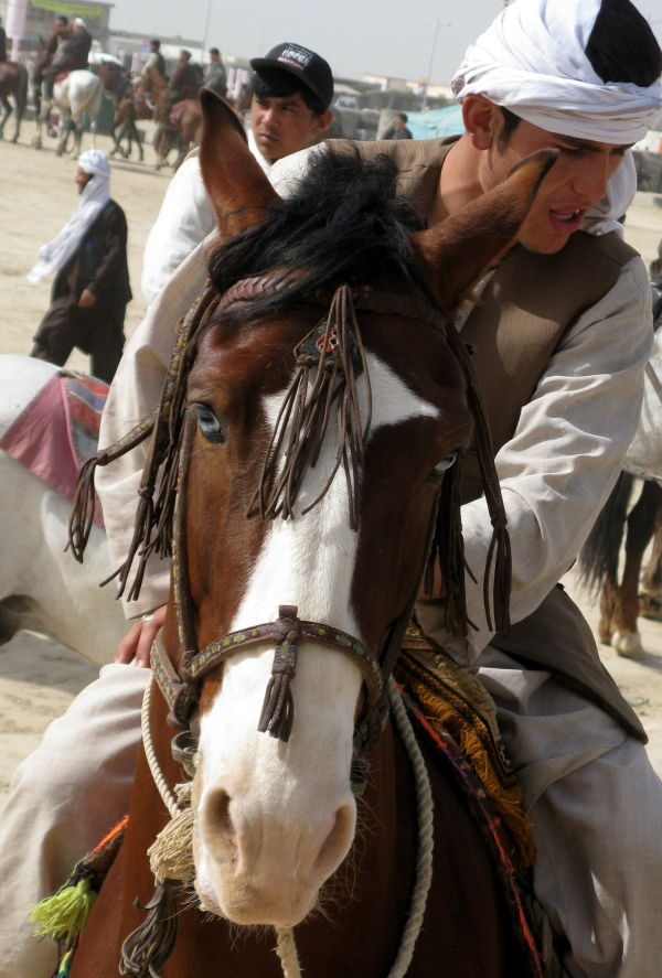 afghan buzkashi horse with unusual eyes