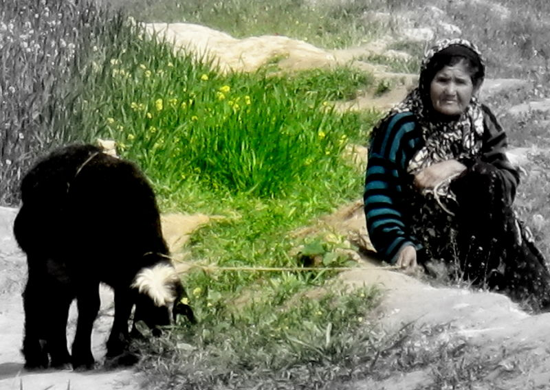 hazara woman and a goat