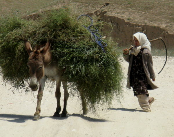 Donkey and a  little  afghan girl