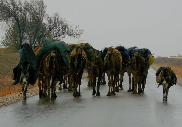 Caravan traveling through nW of AF