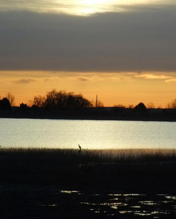 sunset lake Wanneka great blue heron