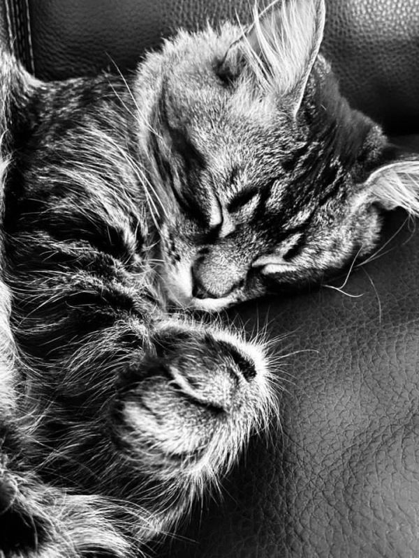 B&W picture  of a sleeping cat