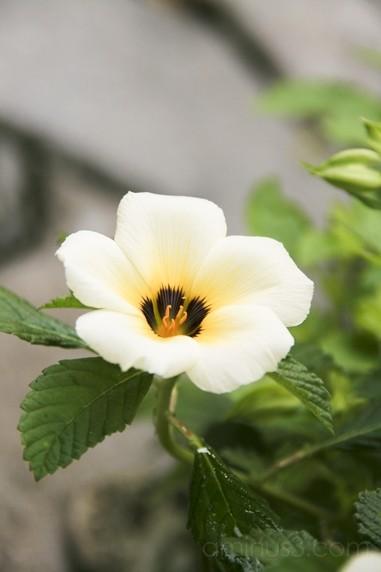 Same flower