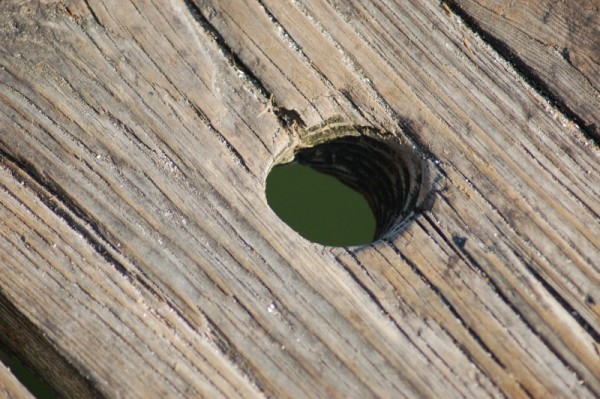 a knothole at the City Pier