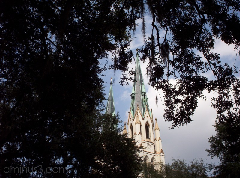 Savannah cathedral, framed in oaks.