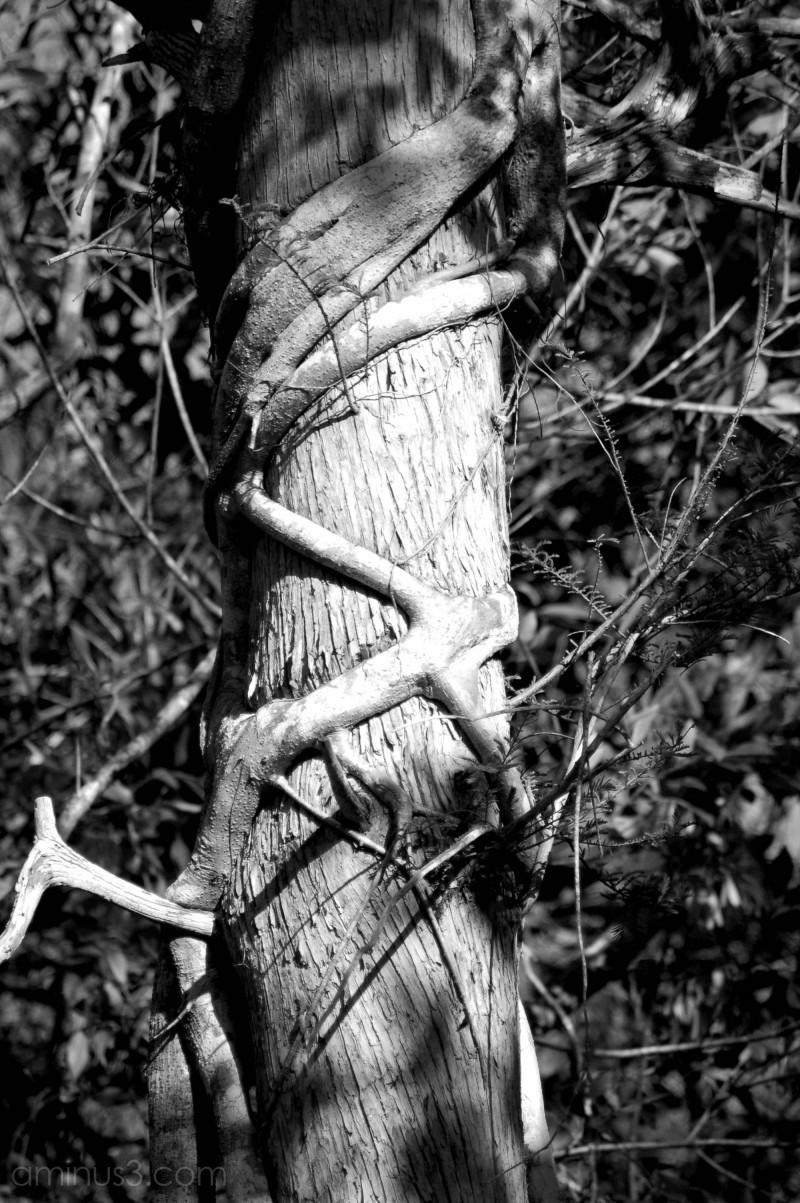 A clinging vine