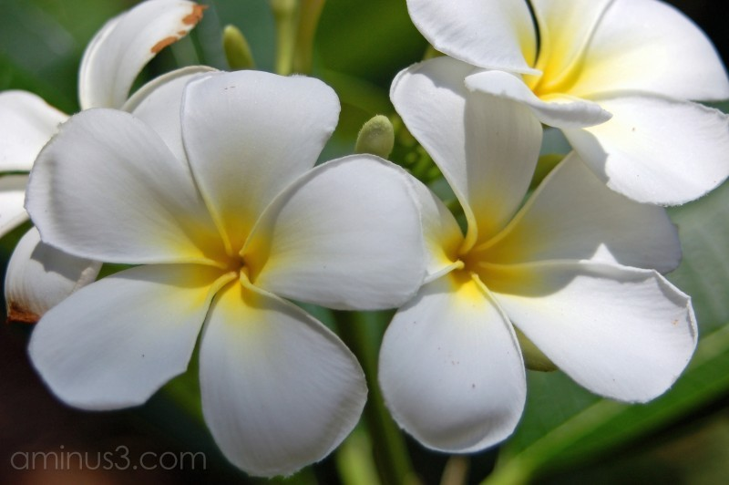 White flowers from Selby Gardens