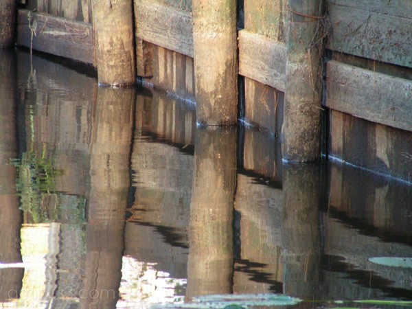 3 Pilings along the Tickfaw River