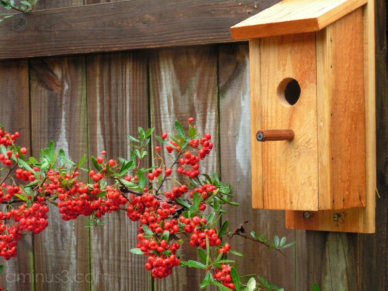 birdhouse and berries