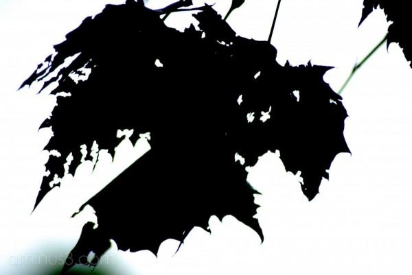Leaf silhouette