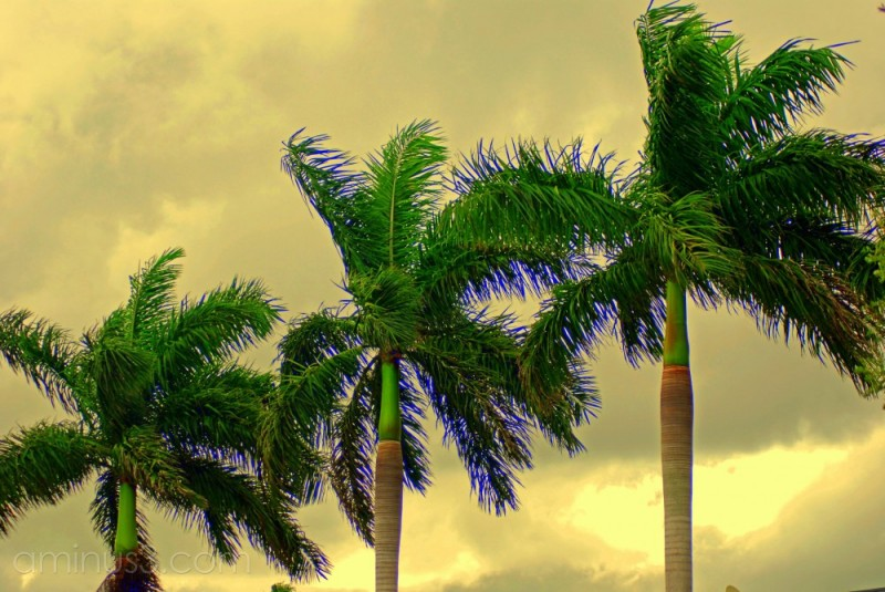 palm trees processed