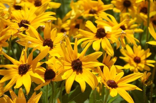Abundant flowers