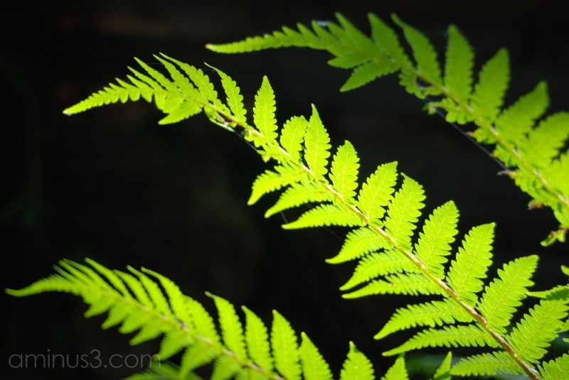 Lighted fern